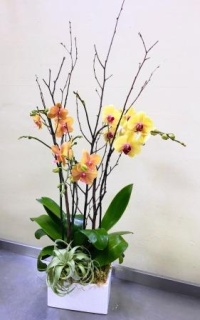 Apricot & Golden Orchid