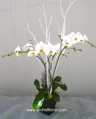 Lush and Elegant White Orchid
