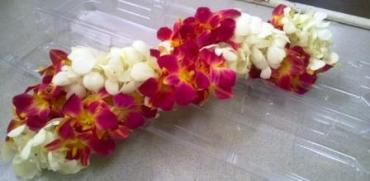 Dendrobium Orchids Lei - White and Coral
