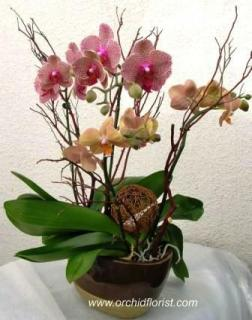 Autumn Orchid